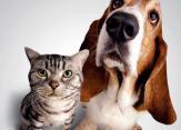 Parduodama_veterinarijos_klinika_vaistine_vilniuje